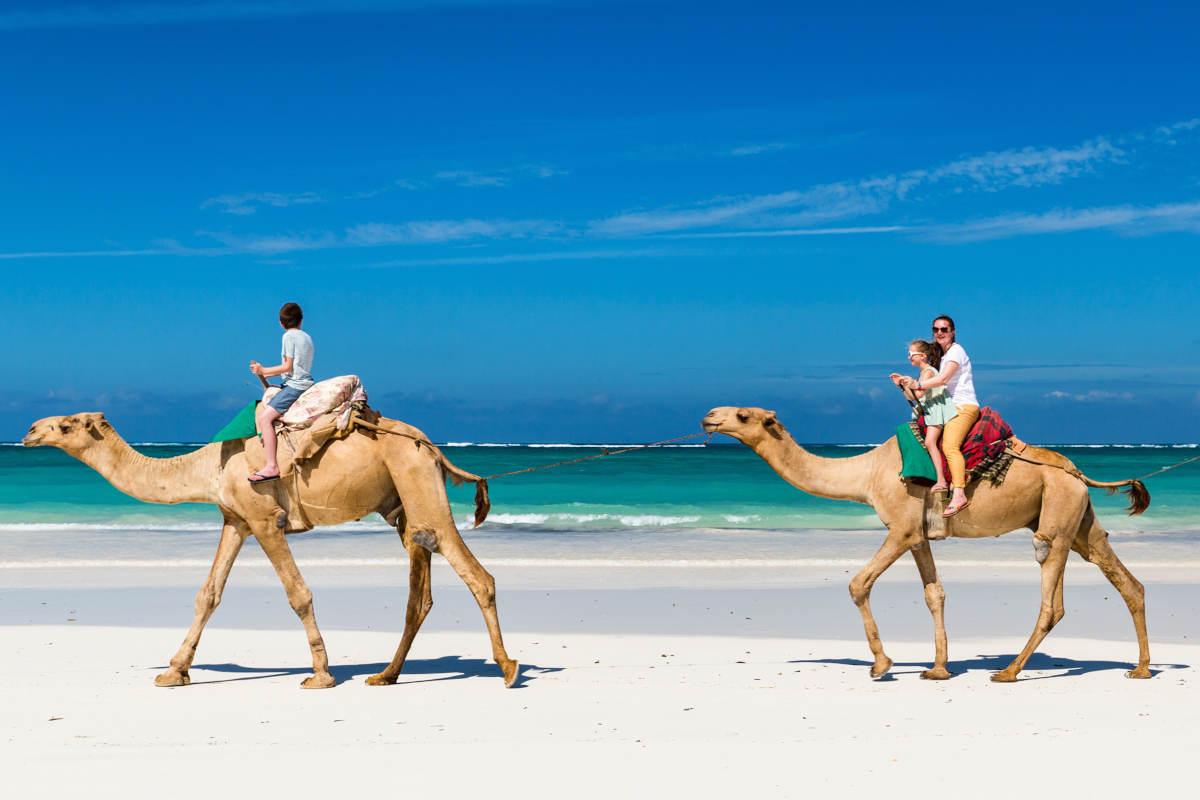 camellos-laguna-djerba-tunez
