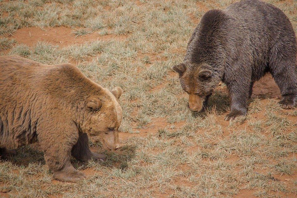 bear-3729322_960_720